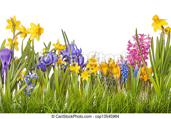 花, 春 - csp13545984