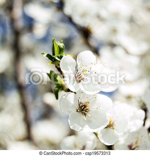 花, 春, 背景 - csp19573313