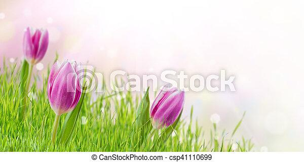 花, 春, 背景, 草 - csp41110699