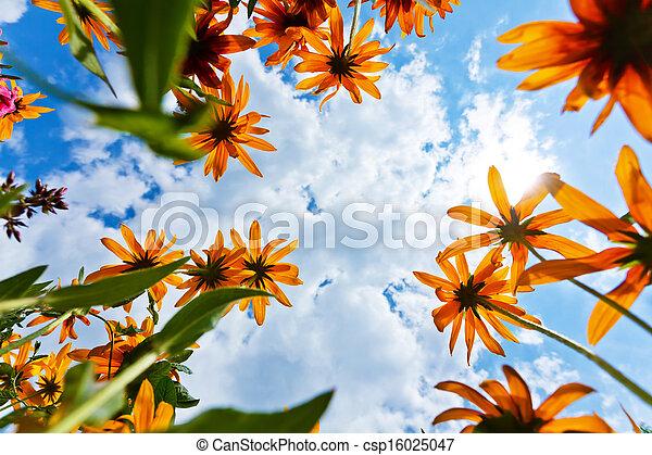 花, 空, echinacea - csp16025047