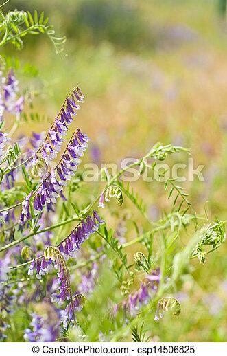 花, 背景 - csp14506825