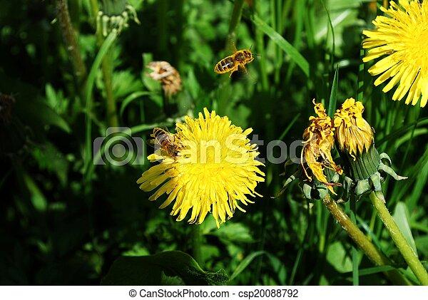 花, 芸術, 背景, 黄色, 春, 美しい - csp20088792