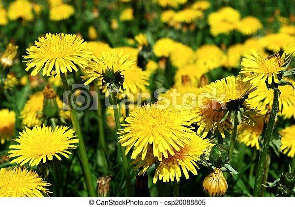 花, 芸術, 背景, 黄色, 春, 美しい - csp20088805