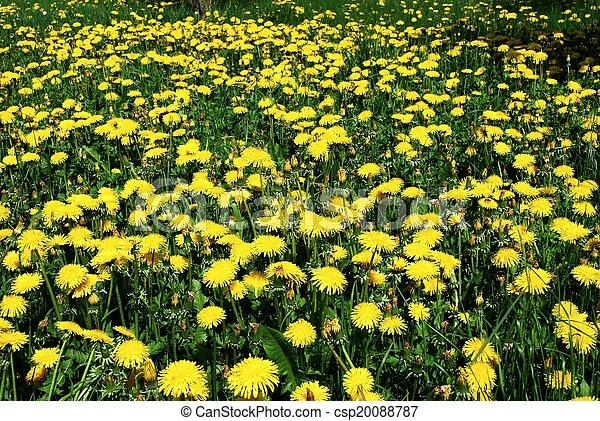 花, 芸術, 背景, 黄色, 春, 美しい - csp20088787