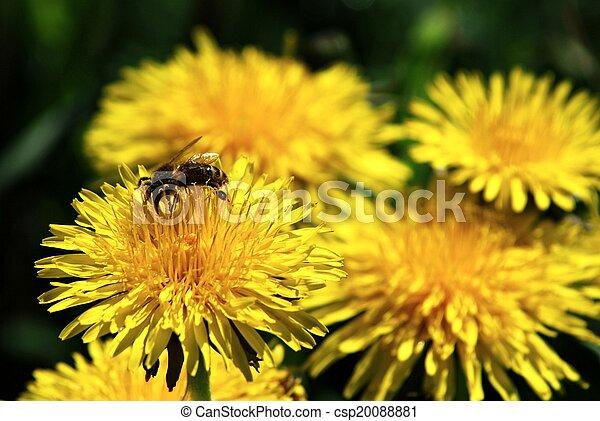 花, 芸術, 背景, 黄色, 春, 美しい - csp20088881