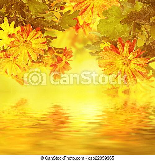 花, 菊, 背景, 金 - csp22059365