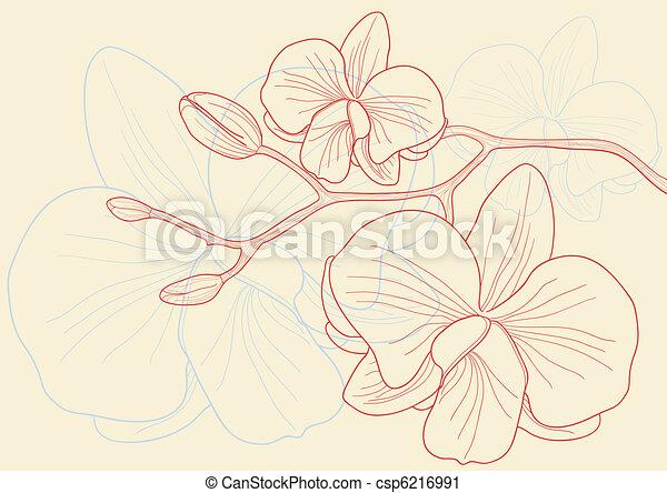 花, 蘭 - csp6216991