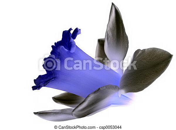 花, 被隔离 - csp0053044