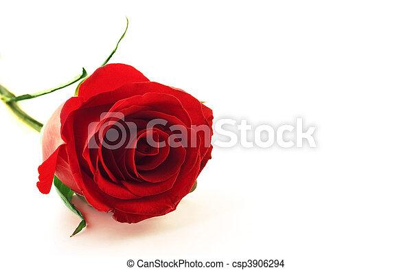 花, 赤は 上がった - csp3906294