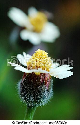 花, 2 - csp0523604