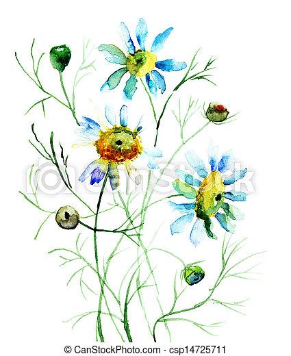 花, camomile - csp14725711