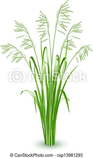 草, ベクトル, 緑 - csp13981293