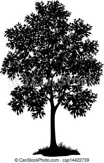 草, 木, シルエット, かえで - csp14422739