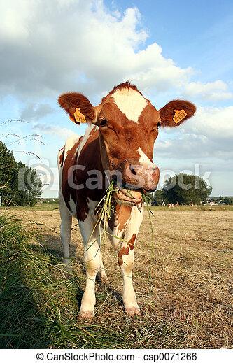 草, 牛 - csp0071266