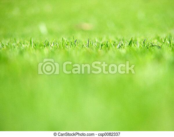 草, 绿色 - csp0082337