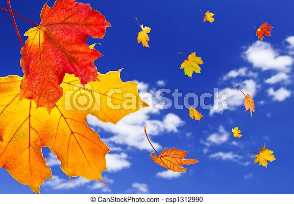 葉, かえで, 背景, 秋 - csp1312990