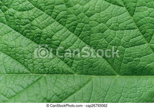 葉, クローズアップ, 緑 - csp26793062
