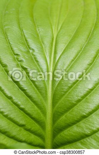 葉, クローズアップ, 緑 - csp38300857
