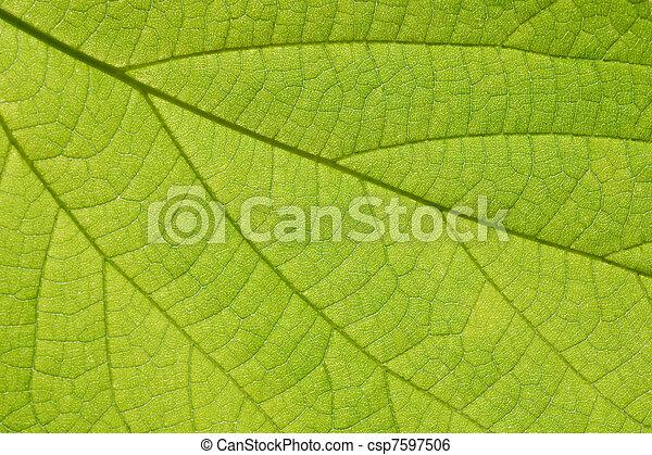 葉, クローズアップ, 緑 - csp7597506