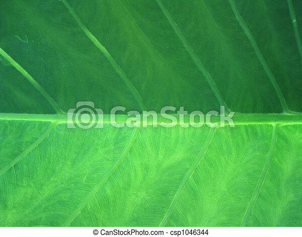 葉, クローズアップ, 緑 - csp1046344