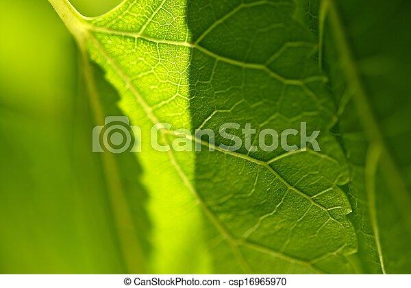 葉, クローズアップ, 緑 - csp16965970