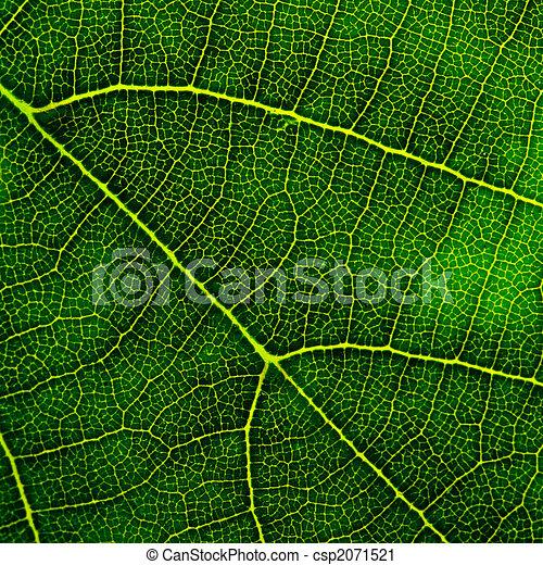葉, クローズアップ, 緑 - csp2071521