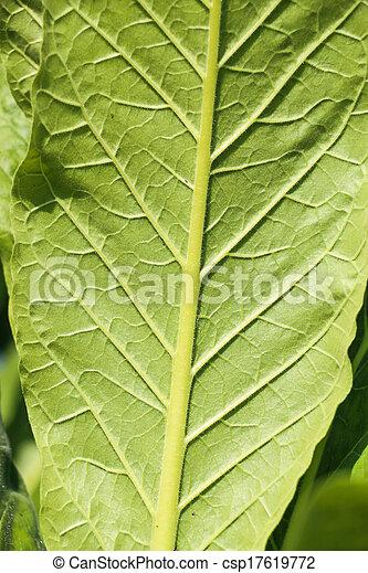 葉, タバコ - csp17619772