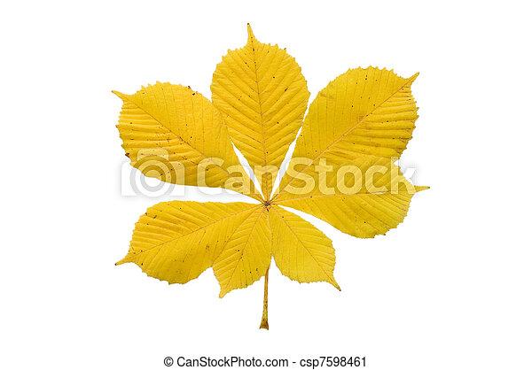 葉, 上に, 隔離された, 秋, 背景, 白 - csp7598461