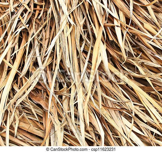 葉, 干し草, かえで - csp11623231