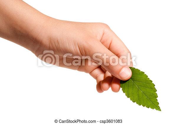 葉, 手を持つ - csp3601083