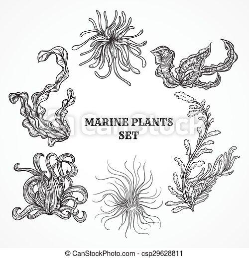 葉, 植物, 海洋, 海草 - csp29628811