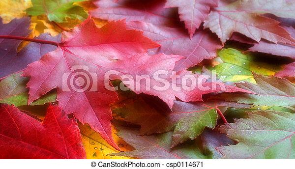 葉, 秋 - csp0114671