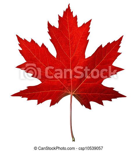 葉, 赤いカエデ - csp10539057