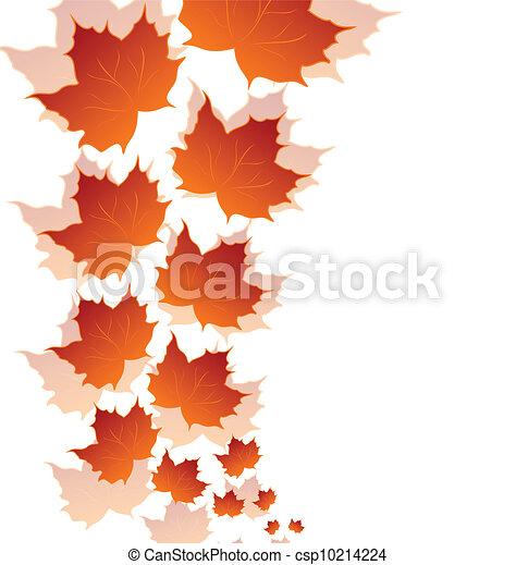 葉, 隔離された, 秋, 背景, 白, かえで - csp10214224