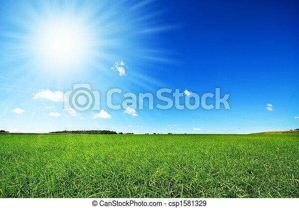 蓝的天空, 明亮, 绿色, 新鲜, 草 - csp1581329