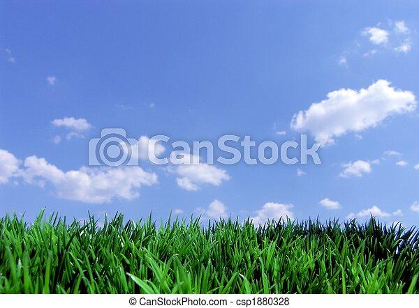 蓝的天空, 草, 绿色 - csp1880328