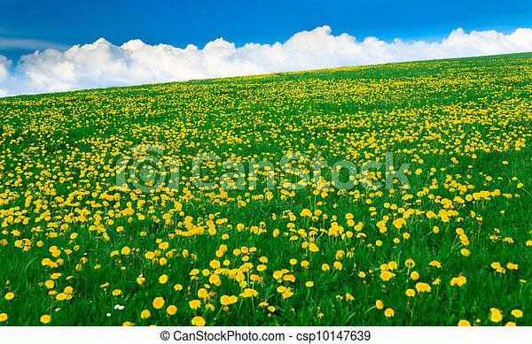 蓝色, 领域, 春天, -, 绿色的风景, 天空素材照片