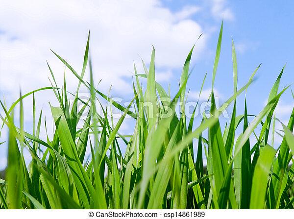 藍色, sky., 太陽, 領域, 綠色, 在下面, 草, 正午 - csp14861989
