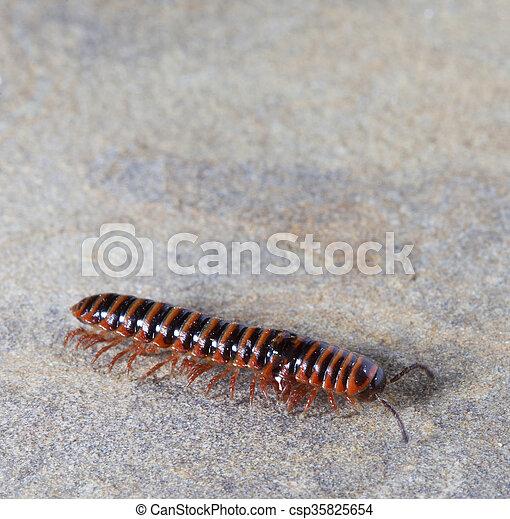 な 小さい 虫 みたい ムカデ