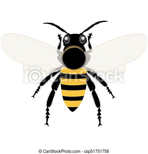 蜂蜜 イラスト 蜂
