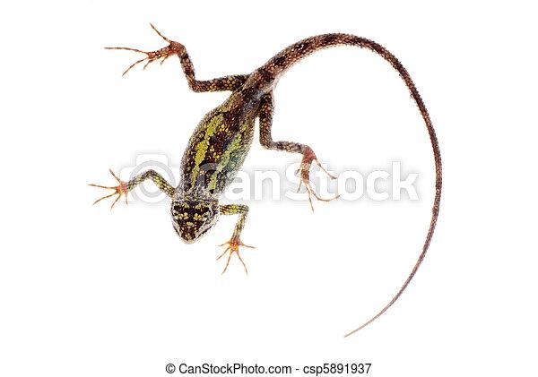 蜥蜴, 樹, 動物, 中國龍 - csp5891937