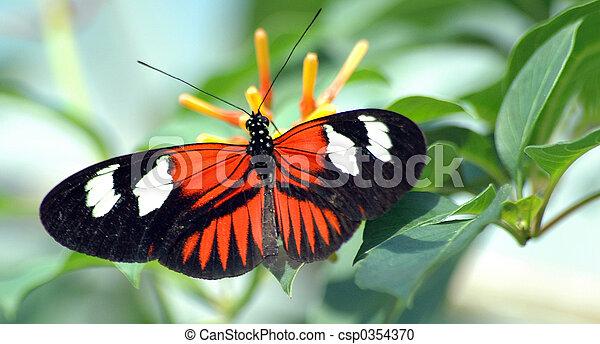 蝴蝶, 葉子, heliconius - csp0354370