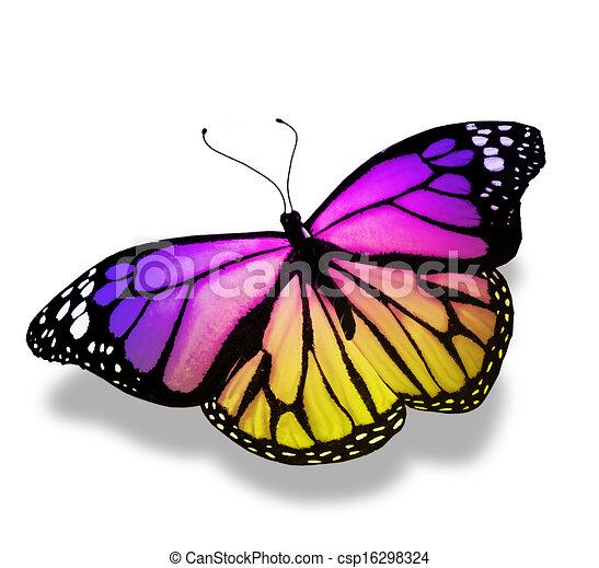 蝶, 白, 隔離された, 背景, すみれ - csp16298324