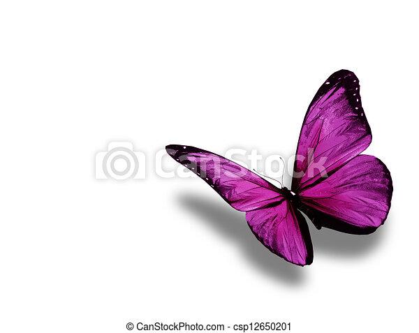 蝶, 白, 隔離された, 背景, すみれ - csp12650201