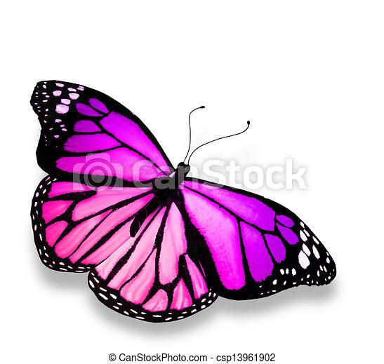 蝶, 白, 隔離された, 背景, すみれ - csp13961902