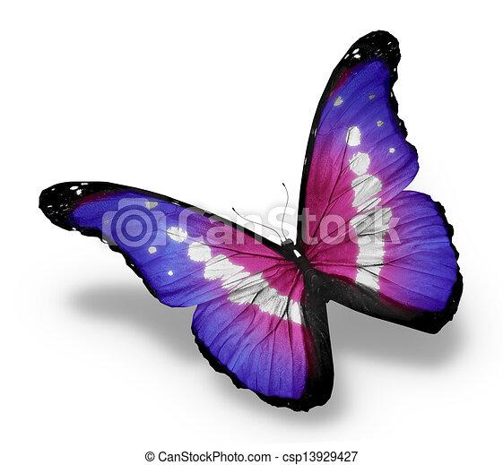 蝶, 隔離された, 背景, すみれ, 白, morpho - csp13929427