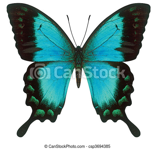 蝶, swallowtail - csp3694385