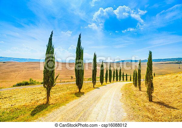 行, d, val, italy, 絲柏, tuscany, 樹, 陸地, 路, 鄉村, 白色, europe., siena, orcia, 風景 - csp16088012