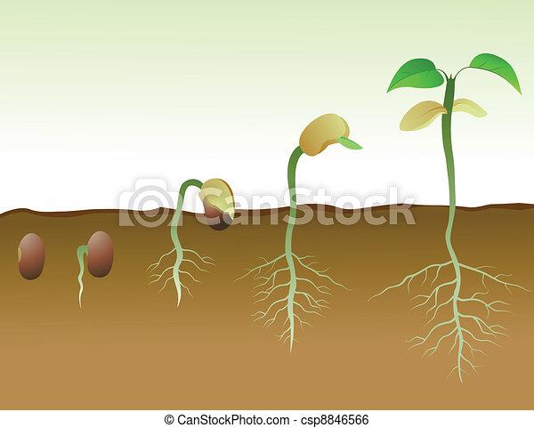 豆 Squence 種 発芽 土壌 イラスト Squence 豆 ベクトル 発芽 種