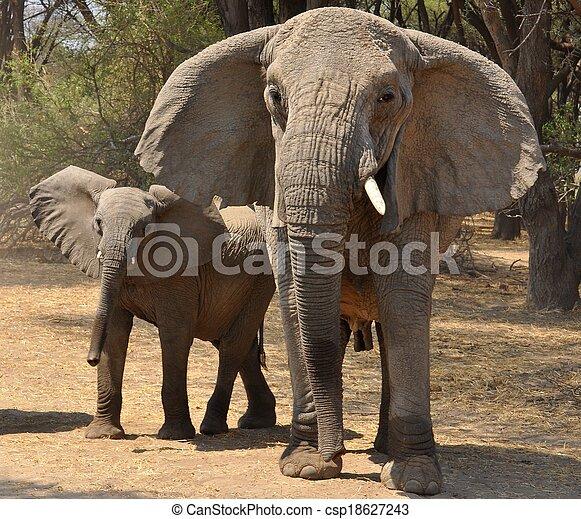 象, きば, 群れ - csp18627243
